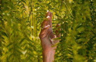 Main dans la végétation